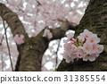tree, roadside trees, park 31385554