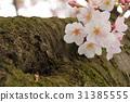 tree, roadside trees, park 31385555