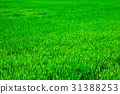 grass green background 31388253