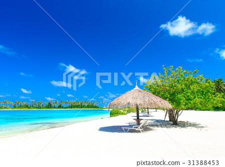 sea in Maldives 31388453