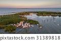 white pelicans (pelecanus onocrotalus) 31389818