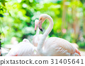 Flamingo Natural Backgrounds 31405641