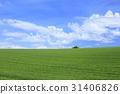 wheat, field, wheatfield 31406826
