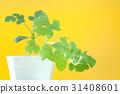 新鮮 綠色 綠 31408601