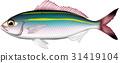 물고기, 생선, 벡터 31419104