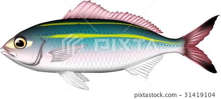 벡터, 물고기, 생선 31419104