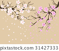 cherry blossoms background 31427333