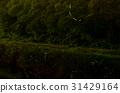 Firefly trajectory 31429164