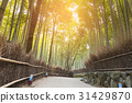 Walking way leading to Bamboo forest 31429870