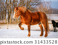 Rural scene with two horses in snow 31433528