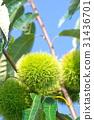 自然 風景 植物 31436701