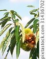 自然 風景 植物 31436702