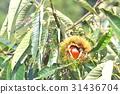 自然 風景 植物 31436704