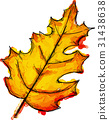 Watercolor Paint Of Pinnately Lobed Autumn Leaf 31438638