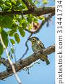 自然 鸟儿 鸟 31441734