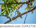 自然 鸟儿 鸟 31441736