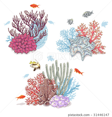 Corals and Swimming Fishes 31446147