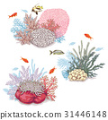 Corals and Swimming Fishes 31446148