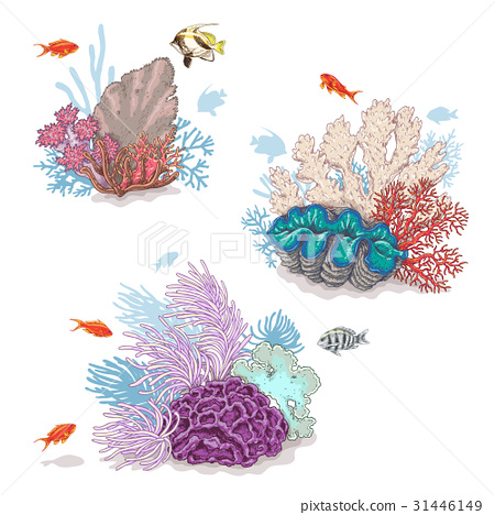 Corals and Swimming Fishes 31446149