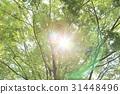 風景 翠綠 鮮綠 31448496