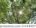 風景 翠綠 鮮綠 31448497