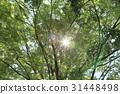 風景 翠綠 鮮綠 31448498