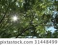 風景 翠綠 鮮綠 31448499