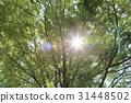 風景 翠綠 鮮綠 31448502