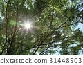 風景 翠綠 鮮綠 31448503