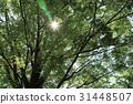 風景 翠綠 鮮綠 31448507
