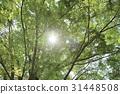 風景 翠綠 鮮綠 31448508