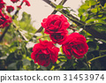 Toned image of beautiful roses on fence at garden 31453974
