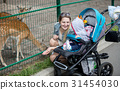 mother showing animals to her baby boy in the zoo 31454030
