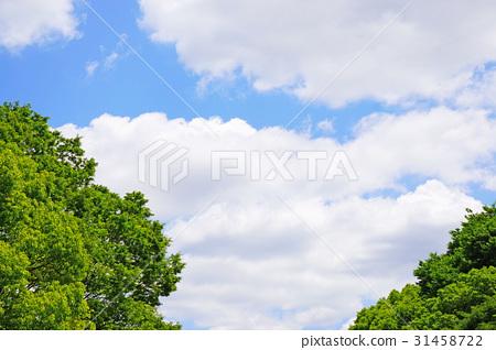 Blue sky and tree 56 31458722