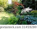 colorful spring garden 31459280