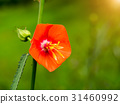 Orange wild grass in the nature. 31460992