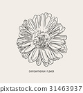Chrysanthemum  flower  , sketch vector. 31463937