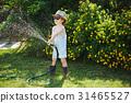 軟管 水 花園 31465527