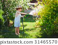 little boy watering the garden with hose 31465570