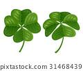 Green four-leaves shamrock 31468439