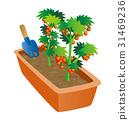 園藝,迷你番茄栽培,小番茄 31469236