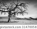 desert namibia sossusvlei 31470058