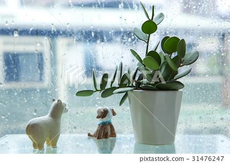 陰雨天氣,窗台,花盤,王子,雨,窗戶,花盆,娃娃,雨,窗台,娃娃 31476247