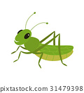 Green grasshopper on a white background 31479398