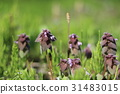 bloom, blossom, blossoms 31483015