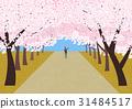 봄, 여행, 벚꽃 31484517