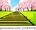 커플, 벚꽃, 날짜 31484558