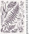 背景 植物的 羊齒草 31486533