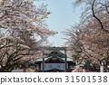 hall of worship, front shrine, cherry blossom 31501538