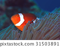 fish, fishes, tropical fish 31503891